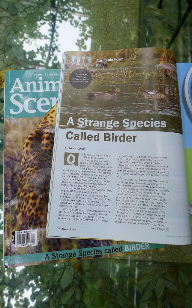 Animal Scene, October 2013